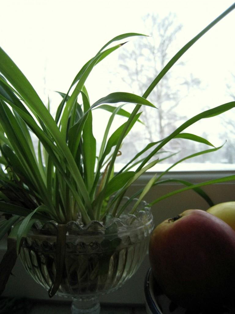 kasvit (1)