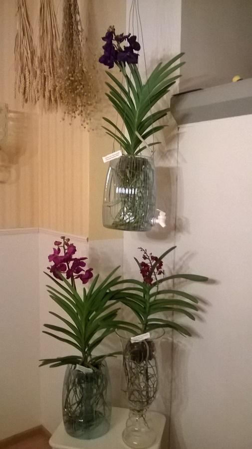 ss-orkidearuukkuja