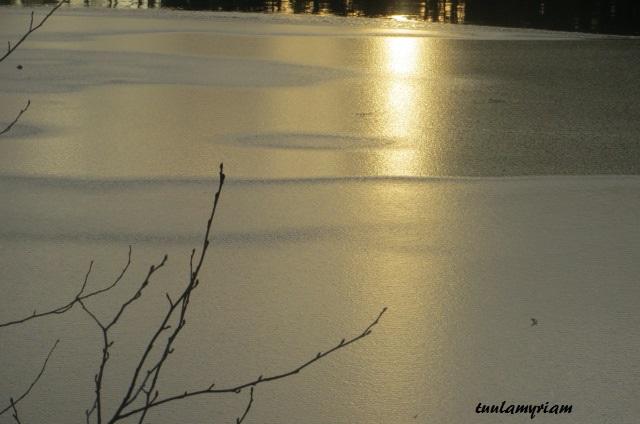 Ilta-aurinko kultaa Kolmisopen lammen jäähileet. Päivä on lyhyt. On kotiinpaluun aika.